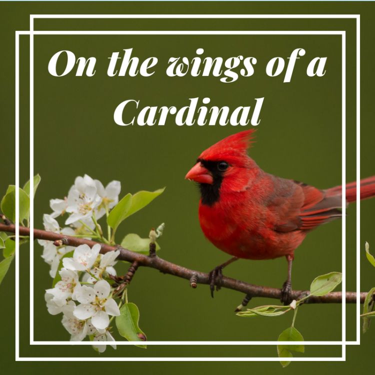 On the Wings of a Cardinal